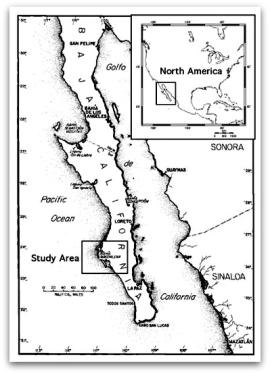 Bases militares norteamericanas en la península de Baja