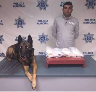D A UNIDAD CANINA POLICIA DE TIJUANA