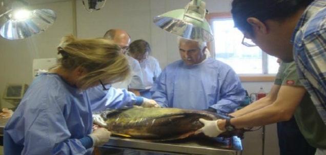 d a vaquita marina de baja california