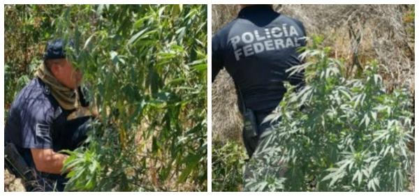 D A  POLICIA FEDERAL EN ENSENADA