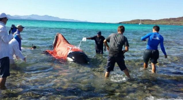 0-a-orca-en-loreto