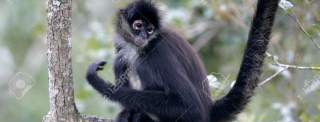 d-mono-arana-tijuana-zoo