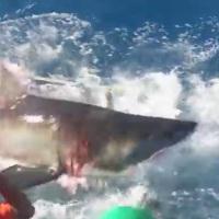 #PÁNICO #ENSENADA: ¡Gigantesco tiburón blanco rompió la jaula del buzo!