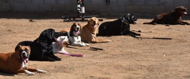 d-perros-educados-4