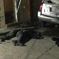 #VIDEOS: En operativo de la Armada de México en #Tepic fue abatido el H2 Juan Francisco Patrón