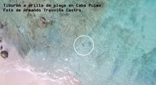 d a a a a tiburon a orilla en cabo pulmo