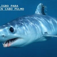 #LosCabos: Dos días tardaron en confirmar autoridades que el joven fue devorado por tiburones en Cabo Pulmo