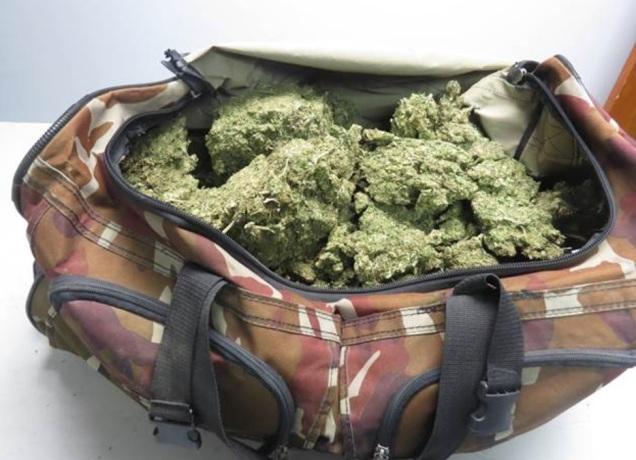 d a a marihuana michoacan