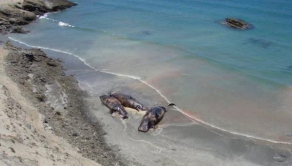 d a a a ballenas bahia tortugas