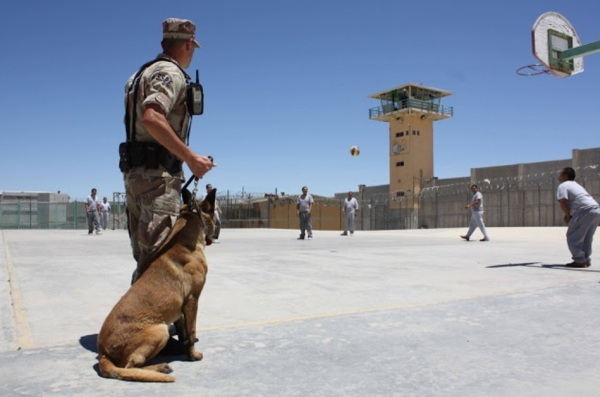 d a a perros caninos estados unidos carcel