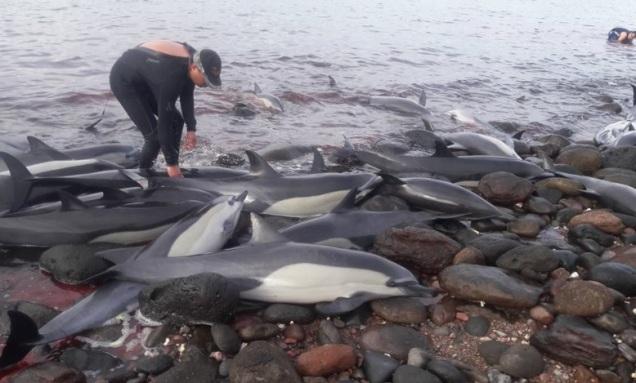 d a a a varamiento delfines