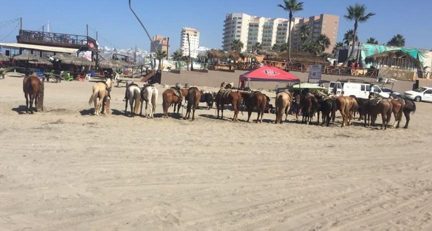 d a a a a caballos rosarito